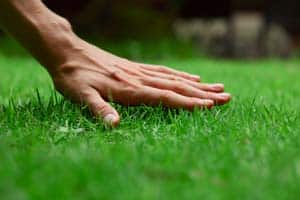 Custom Green Lawns Lawn Care