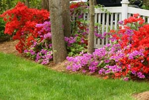Altamonte Springs Lawn Treatment