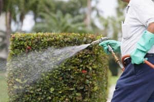 Winter Springs Lawn Treatment